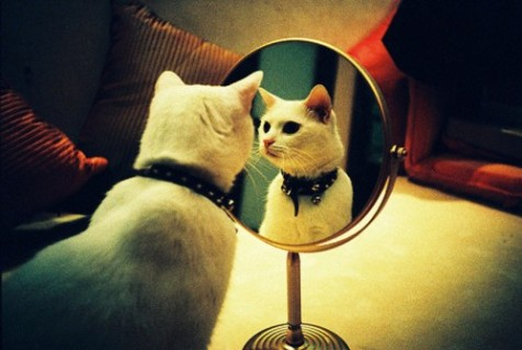 cat-snowwhite and the mirror