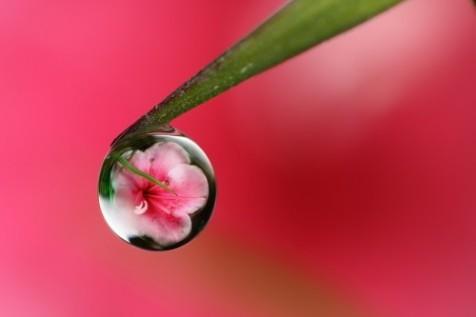 believe135 (flower)